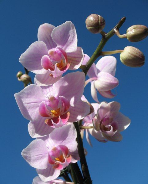Orchid in pink-: macro of a beautiful flower- just that...