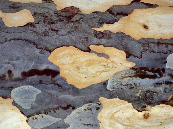 natural tree trunk mosaics1