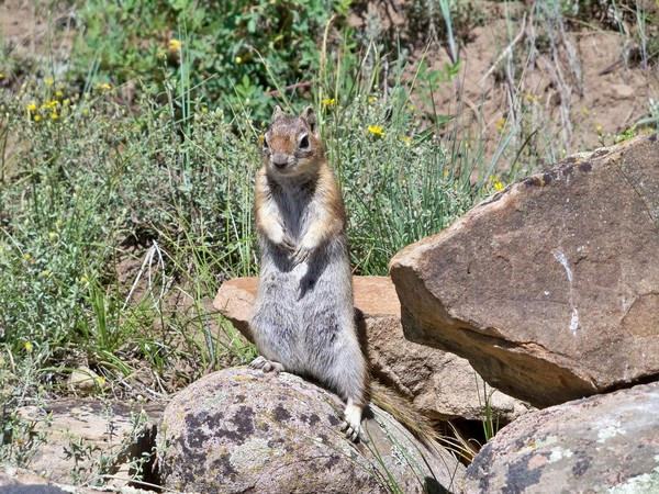Squirrel on the trail: A curious squirrel watched us as we hiked along the Piedra River trail in Colorado.