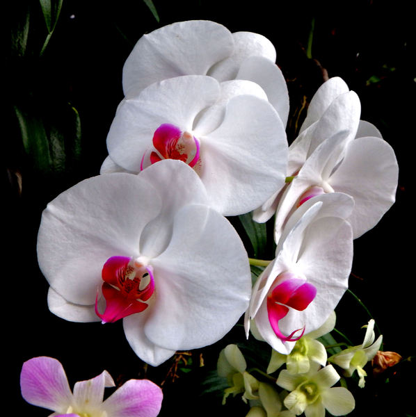 orchid shapes & colors5