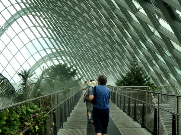 curved ceiling windows1: Singapore's Gardens by the Bay columnless conservatory domes