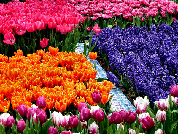 flower dome tulip display36