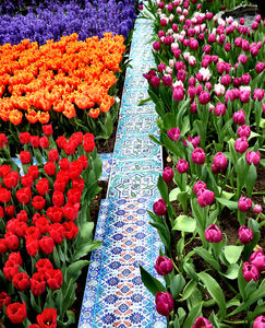 flower dome tulip display39