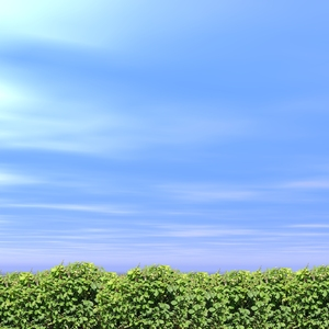 Sky background: Sky background with bushes.