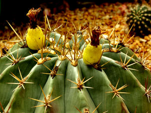 cacti & succulent gardens16: cacti and succulent varieties in specialised cactus garden