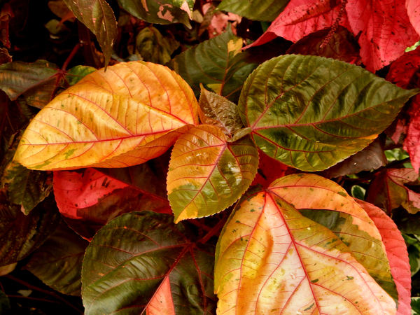 color foliage backgrounds3