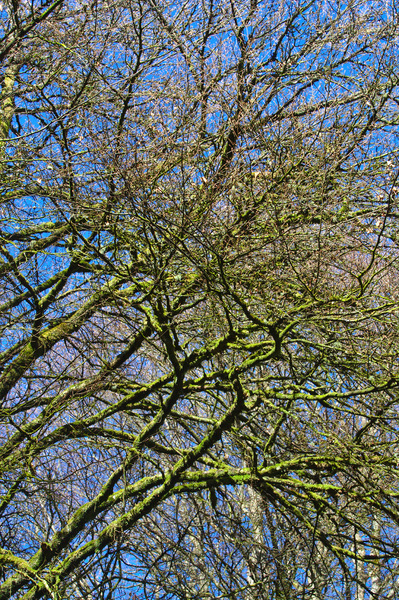 Bare green branches