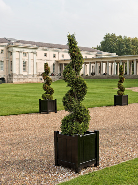 Topiary: Spiral topiary in the grounds of the Queen's House, Greenwich, London, UK. Photography in this area was freely permitted.