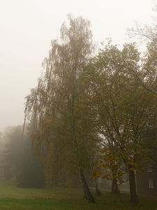 foggy october idyll