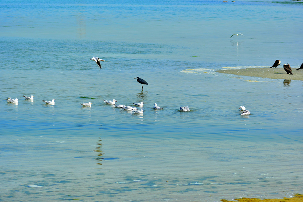 Sea Gulls on the shore