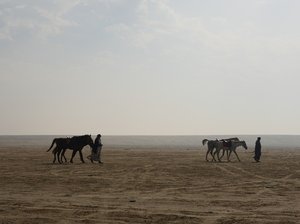 Riding horses in the desert: People are riding the horses for fun in the desert. This image is of one single horseman returning from a trip with his horses at the sun time