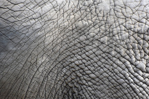 elephant skin texture: You can create monster skin with this texture.