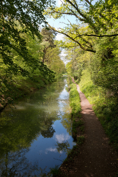 Canal: The Basingstoke Canal in spring in Hampshire, England.