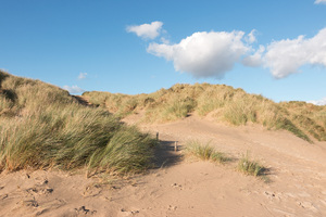 Sand dunes with marram grass: Sand dunes with marram grass (Ammophila) at Camber Sands, East Sussex, England, photographed in evening light.