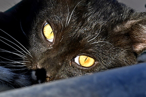 Cat´s eyes: Eyes of a cute cat a lovely kitten in a close up shot. Cat lovers like to take photos of their pets at home or in the garden.