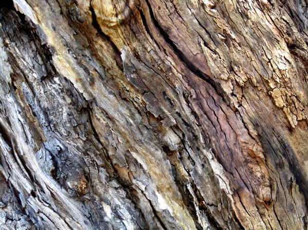 textured tree trunk3