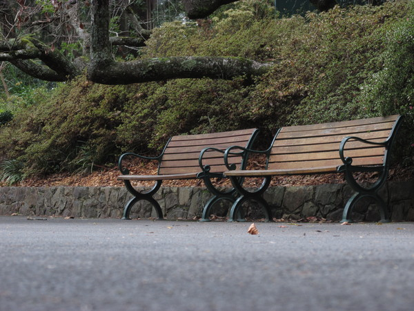 Park benches: Two park benches for botanic garden visitors to rest