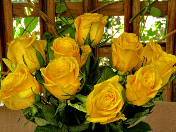 vase of gold2: bunch of dark yellow roses in vase