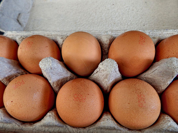 not quite a dozen2: brown eggs in egg carton – including rubber nesting false egg (top third from left)