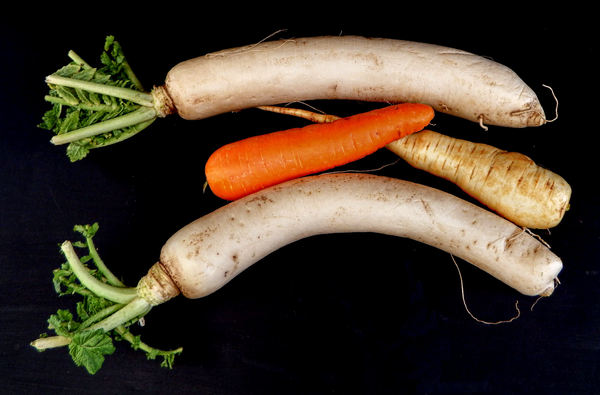 Japanese radish2: large Japanese white radish - daikon - with a standard size carrot and parsnip for comparison