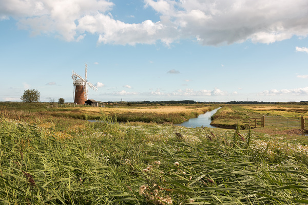 Fenland with windmill