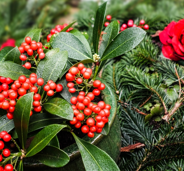 decorative red berries: decorative red berries