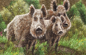 painted wild boar 2