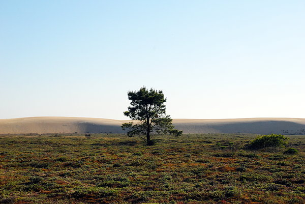 Isolated tree near the big dun