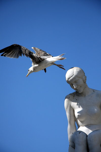 Seagull and sculpture: Seagull and sculpture in Porto city, portugal, eu