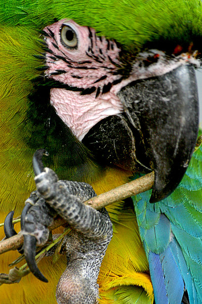 Polly Wants A Cracker: Colourful parrot :D