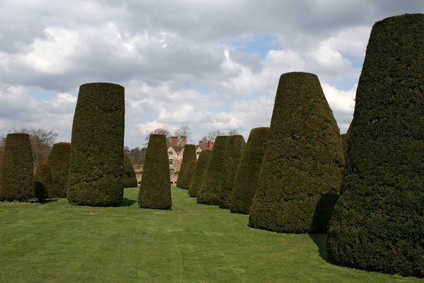 Topiary 1: Clipped yew (Taxus) trees in the grounds of a stately house in England.
