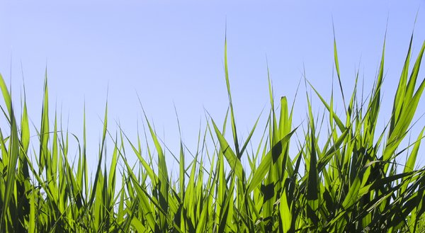 Grass: Tall summer grass