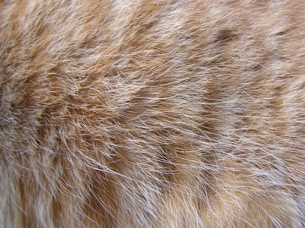 Cat's red fur texture: A fur of a red/white cat.Please mail me or comment this photo if you found it useful. Thanks for letting me know!I would be happy to receive the information about picture usage. I would be extremely happy to see the final work even if you think it is noth