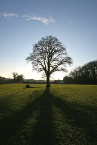 Winter tree: A tree silhouetted by late afternoon sunlight in West Sussex, England, in winter.