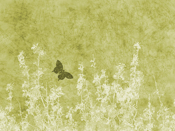 Green Nature Grunge: A grungy meadow with butterfly textured background.  Lots of copyspace.