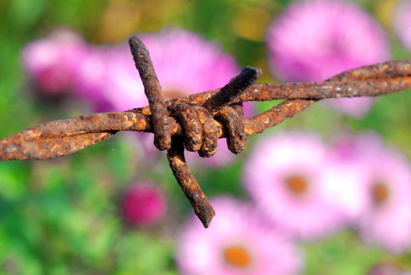 Nature colours at autumn 4: Colours of the autumn and rusty barbed wire