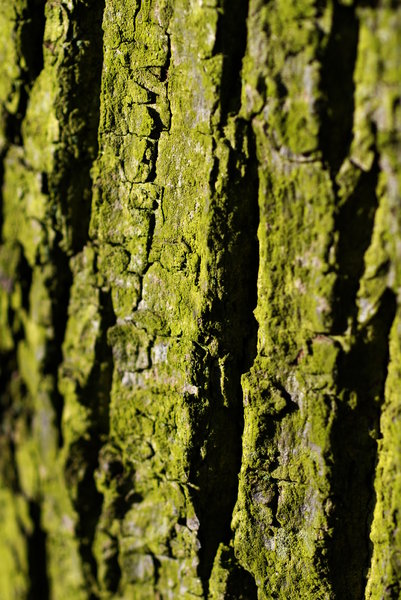 Bark - texture 3: Bark is the outermost layers of stems and roots of woody plants