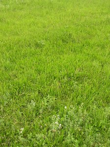 Meadow texture: Just a meadow. Please let me know if you decide to use it!