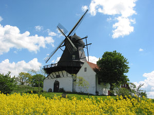 wind mill and yellow field