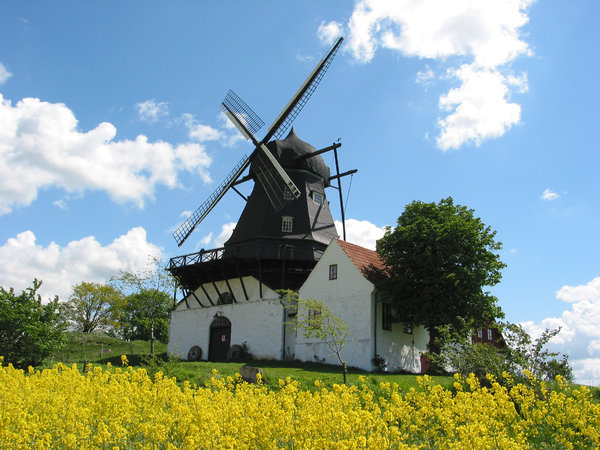 wind mill and yellow field: Kronetorp's windmill just north of the city Malmo in southern Sweden.