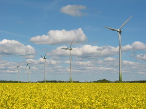 wind mills and yellow field 1
