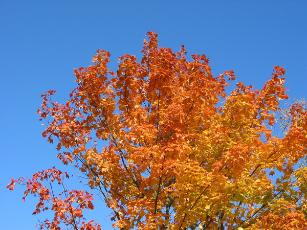 autumn leaves and blue sky 2