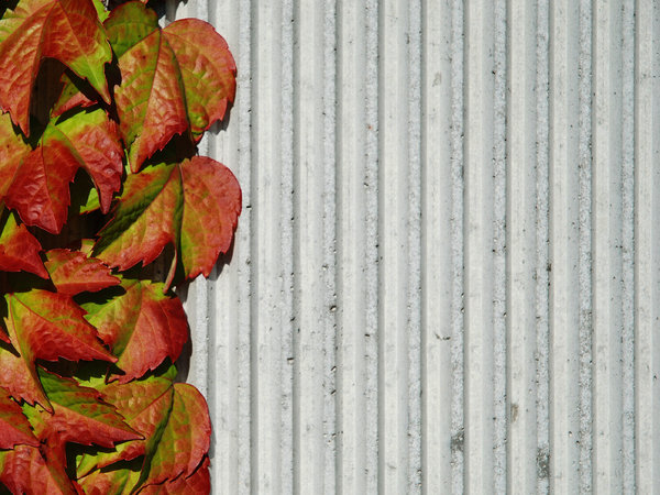Wall and Plant 1
