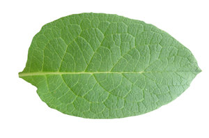 Leaf: Just a leaf. Please let me know if you decide to use it!
