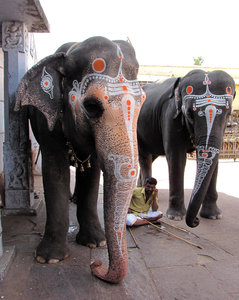 Temple Elephants
