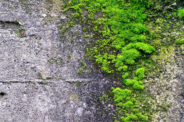 Moss on concrete