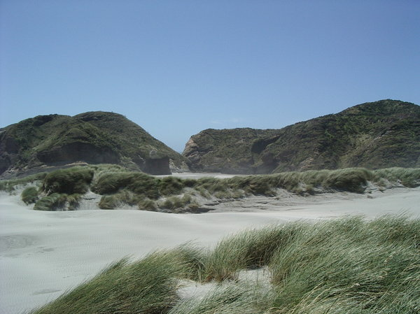 Windswept beach