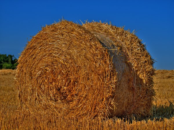Hay rolls - HDR: The picturre is HDR derived form 3 pictures