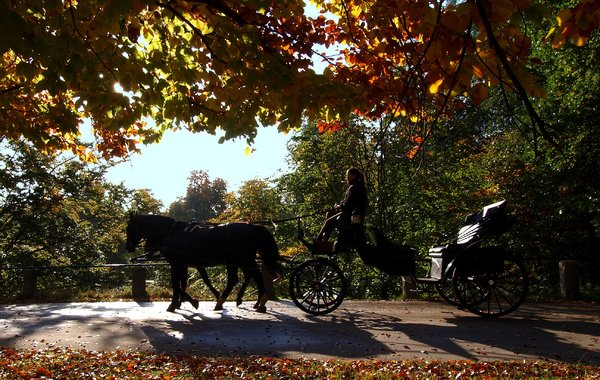 Carriage in Autumn