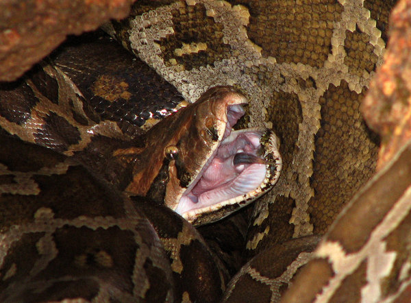 Python: no description